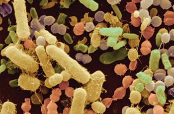 Biofilms behind persistent urinary tract infections